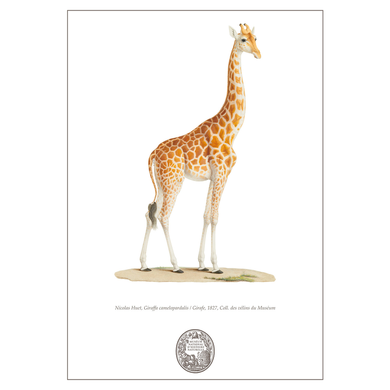Carnet Girafe Collection Inspiration Vélin
