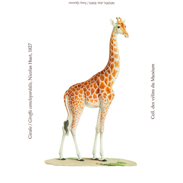 Magnet Girafe Collection Inspiration Vélin